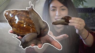 Blue Peter - Emzotic: Giant African Snails!