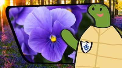 Blue Peter - Shelley's Shenanigans: Spring