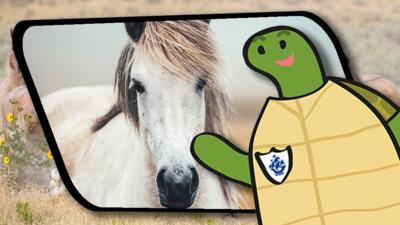 Blue Peter - Shelley's Shenanigans: Horses