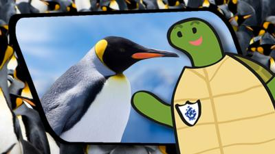 Blue Peter - Shelley's Shenanigans: Penguins