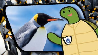 Blue Peter - Shelley's Shenanigans: Penguins