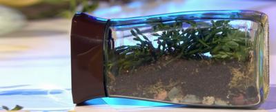 A home made terrarium