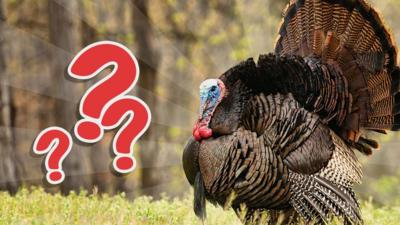 Blue Peter - QUIZ: That's not a turkey!