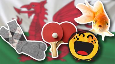 Blue Peter - Can you guess these Welsh word meanings?