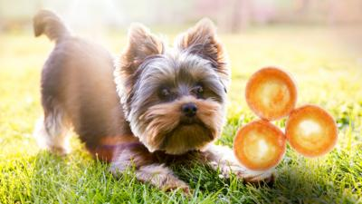 Blue Peter - Yorkshire pudding or Yorkshire terrier?