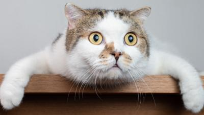 The Pets Factor - MEOWvelous Cat True or False Quiz