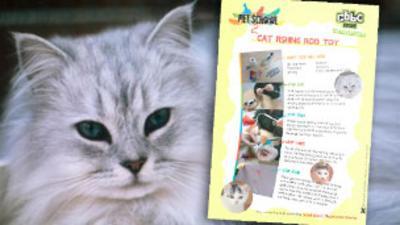 Pet School - Make a Cat Fishing Rod Toy
