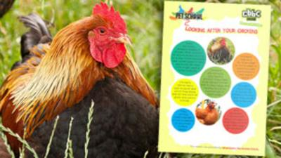 Pet School - How To - Look After Chickens