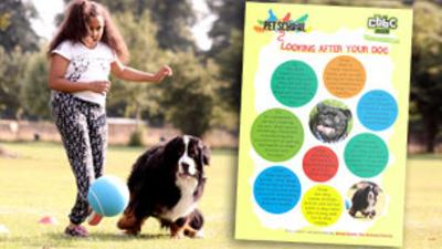Pet School - How To - Look After Dogs