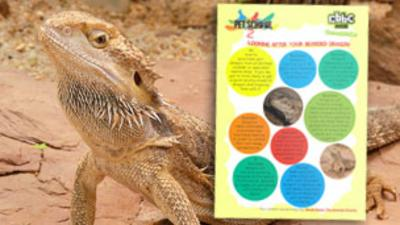 Pet School - How To - Look After Bearded Dragons