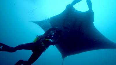 Deadly 60 - A giant manta ray as big as a boat!