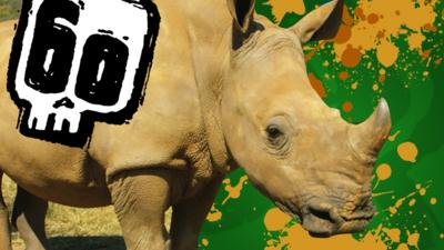 Deadly 60 - Deadly 60 Quiz: Rhinos