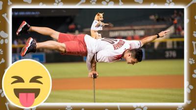 a dog balancing on a man performing before a baseball match.