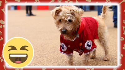 dog in liverpool shirt.