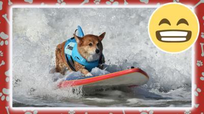 dog surfing.