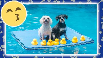 two dogs on a float in a swimming pool.