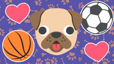BBC Sport - PAW-some sporty pooches!
