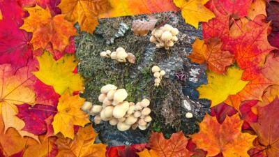 Autumnal photos sent in by the CBBC audience.