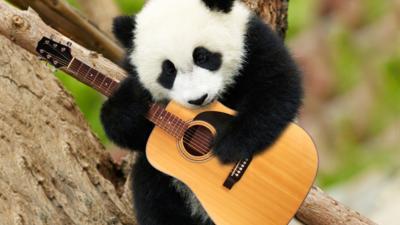 Animaltastic - Gallery: Pandas Playing Instruments