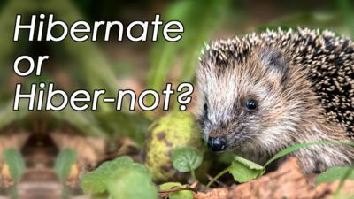 Winterwatch on CBBC - Quiz: Hibernate or Hiber-not?