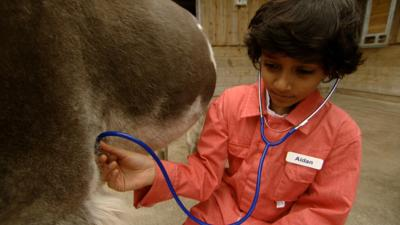 Junior Vets On Call - How DO you take a donkey's temperature?