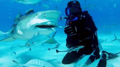 Shark Bites - Lemon Shark