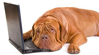Dog sleeping resting head on laptop keyboard