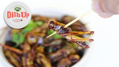 CBBC Dish Up - Can eating insects save the world?
