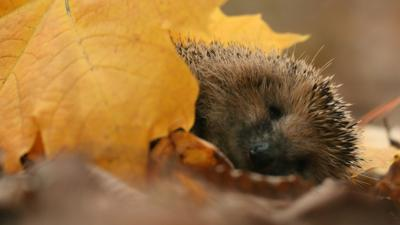 Autumnwatch on CBBC - You told us what you loved about Autumn