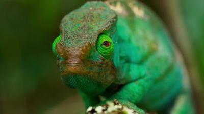 Nature on CBBC - Quiz: Planet Earth II 'Jungles'