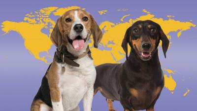 Top Class - Map Master: Dog Breeds