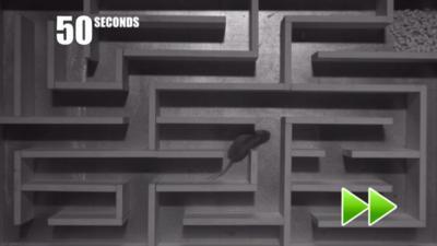 Winterwatch on CBBC - Mouse vs vole maze challenge