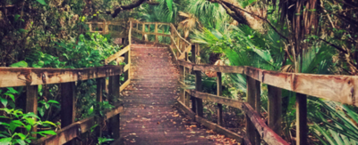 Image shows walkway into a green leafy jungle.