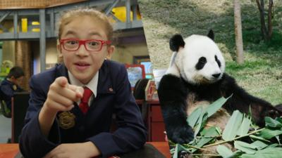 Odd Squad - OddTube: Pandas & pans...duh
