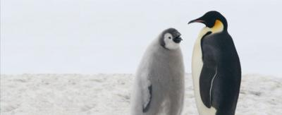 Two penguins in a snowy environment.