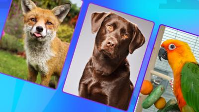 The Pets Factor - Quiz: The Pets Factor: Odd One Out