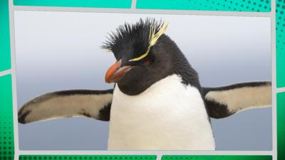 Planet Defenders - Animal Quiz: Gibbons, Dolphins & Penguins!
