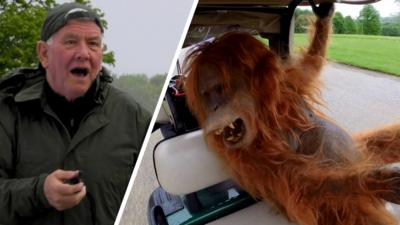 Rank the Prank - Orangutan Escape!