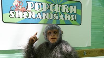 Rank the Prank - Monkey business