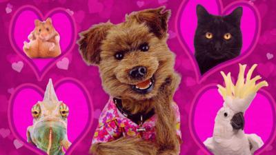 Saturday Mash-Up! - Best Friends Furever