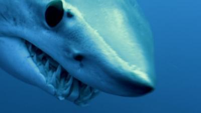 Shark Bites - Mako Shark