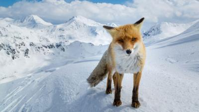 Springwatch on CBBC - Which Cairngorms animal are you?
