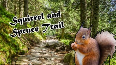 Squirrel and Spruce Trail