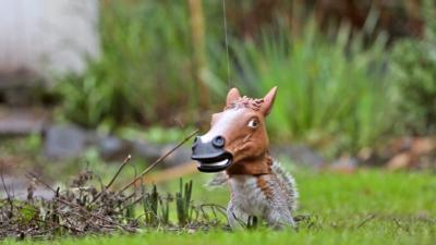 Autumnwatch on CBBC - A squirrel-horse? Surely not...