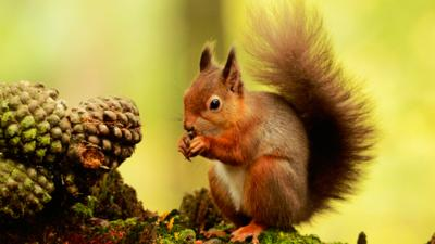 Autumnwatch on CBBC - Ten secret red squirrel spots