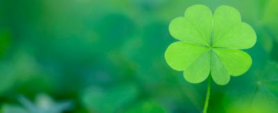 A shamrock against a green background