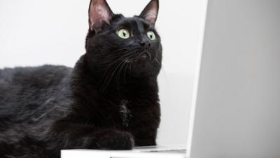 A cat looking at a laptop
