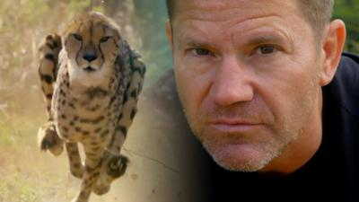 Deadly 60 - Can Steve beat a cheetah in a foot race?