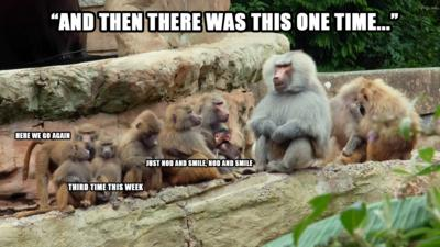 A baboon in front of lots of young baboons saying 'Let me tell you a story'.