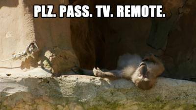 A monkey on it's back wanting the TV remote.